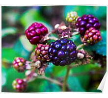 Blackberries Poster
