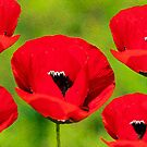Red Flowers by Apostolos Mantzouranis