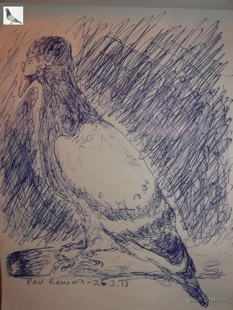Pigeon sketch -(260313)- A5 sketchpad/Blue biro pen by paulramnora