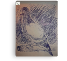 Pigeon sketch -(260313)- A5 sketchpad/Blue biro pen Canvas Print