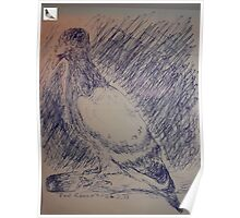 Pigeon sketch -(260313)- A5 sketchpad/Blue biro pen Poster