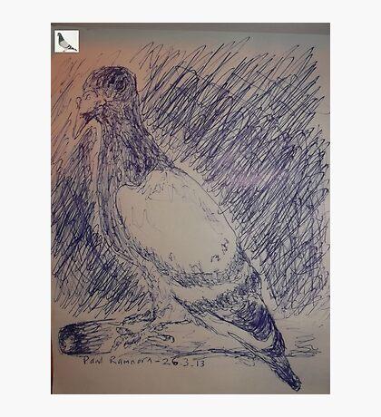Pigeon sketch -(260313)- A5 sketchpad/Blue biro pen Photographic Print