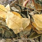Dried Leaves Composition by Arteffecting