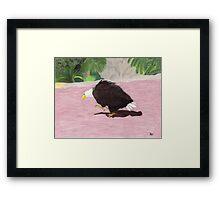 Lonely Eagle Framed Print