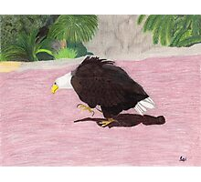 Lonely Eagle Photographic Print