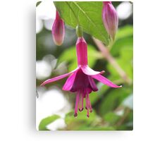 Fuschia Canvas Print