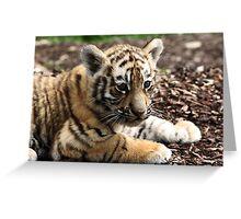 A cute cub Greeting Card