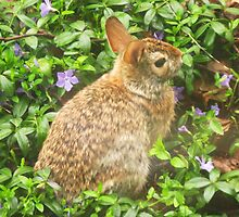 It's That Time Of Year Again ~ Hoppy Spring! by artwhiz47