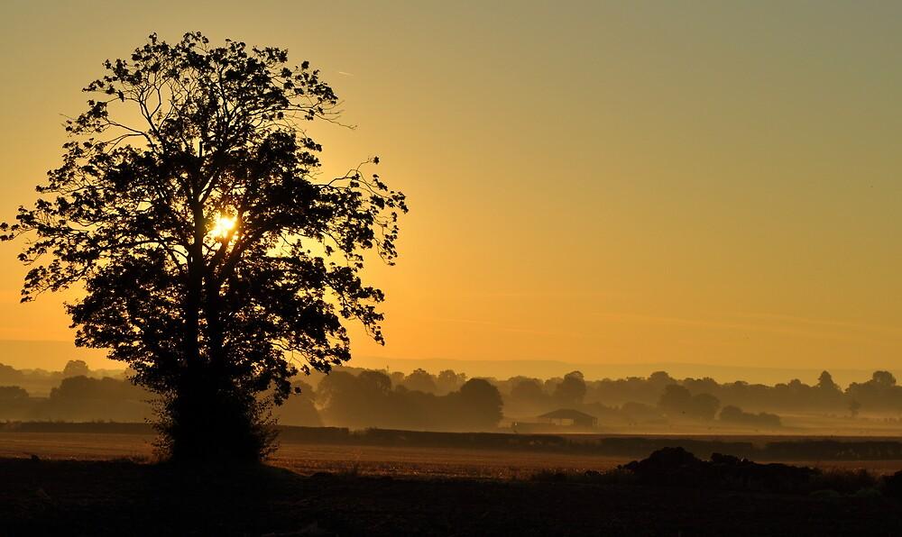 Sunrise by WildatHart
