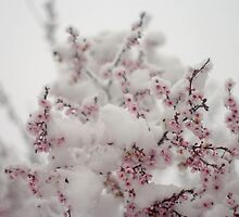 Pink Cherry Blossoms In The Snow by Arteffecting