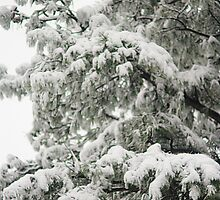 Snow Covered Evergreen Branches by Arteffecting