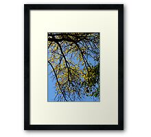 Autumn Leaves Must Fall Framed Print