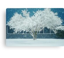 White Snow Covered Tree and Blue Canvas Print