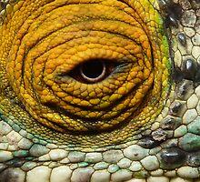 Chameleon Eye by CharlotteMorse