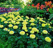 Formal gardens by Nancy Richard