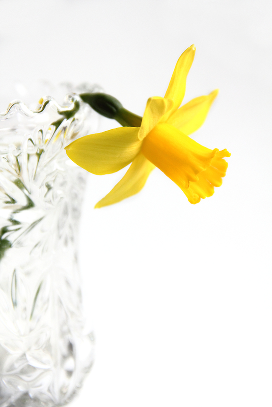 Spring's Offering by Tracy Friesen