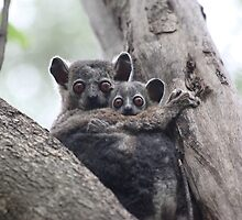 'Sportive Lemur' with Baby - Madagascar by CharlotteMorse