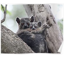 'Sportive Lemur' with Baby - Madagascar Poster