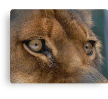 Lioness Eyes Canvas Print