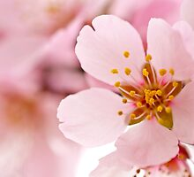 Spring is Here by PKGPhotography