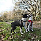 Two Boston Terriers by Ludwig Wagner