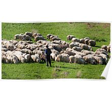 Shepherd and his sheeps Poster