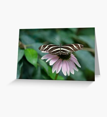 Zebra Longwing (Heliconius charithonia) Greeting Card