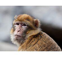 Macaque portrait Photographic Print