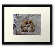 A nice couple of macaques Framed Print