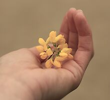 Hand and flower by Kamilya