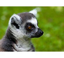 Lemur portrait Photographic Print