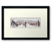 Winter Vineyard Framed Print