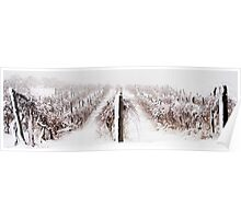 Winter Vineyard Poster