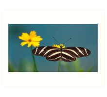 Zebra Longwing (Heliconius charithonia) Art Print