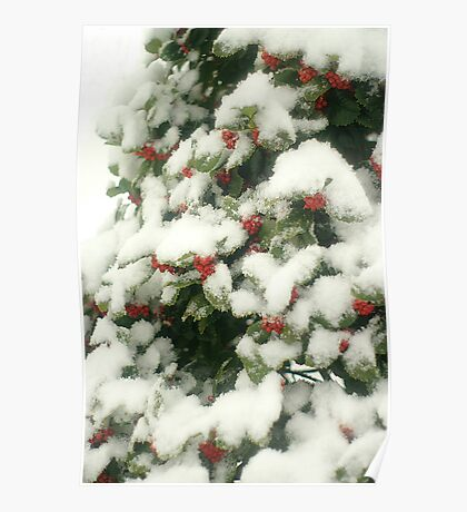 Holly Berries In Snow Poster