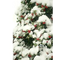 Holly Berries In Snow Photographic Print