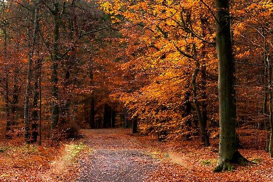 Late Fall #1 by Kofoed