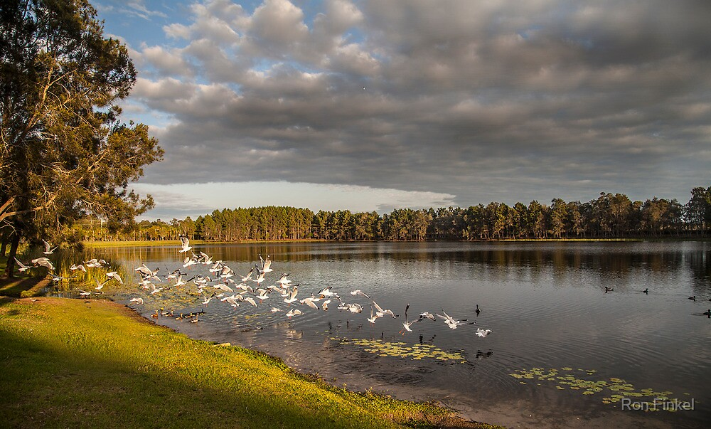 Seagull Paradise by Ron Finkel