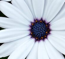 White and blue by Tardy