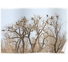 Great Blue Heron Colony Poster