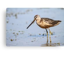 Long-billed Dowitcher: Muddy Waters Canvas Print