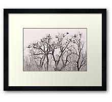 Great Blue Heron Colonies Framed Print