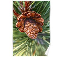 Pine Cone I Poster