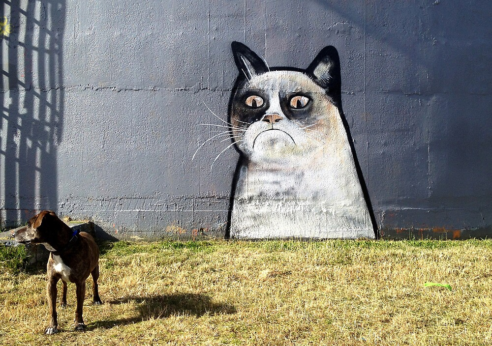 Cat looking grumpy in the dog park by Paul Walsh