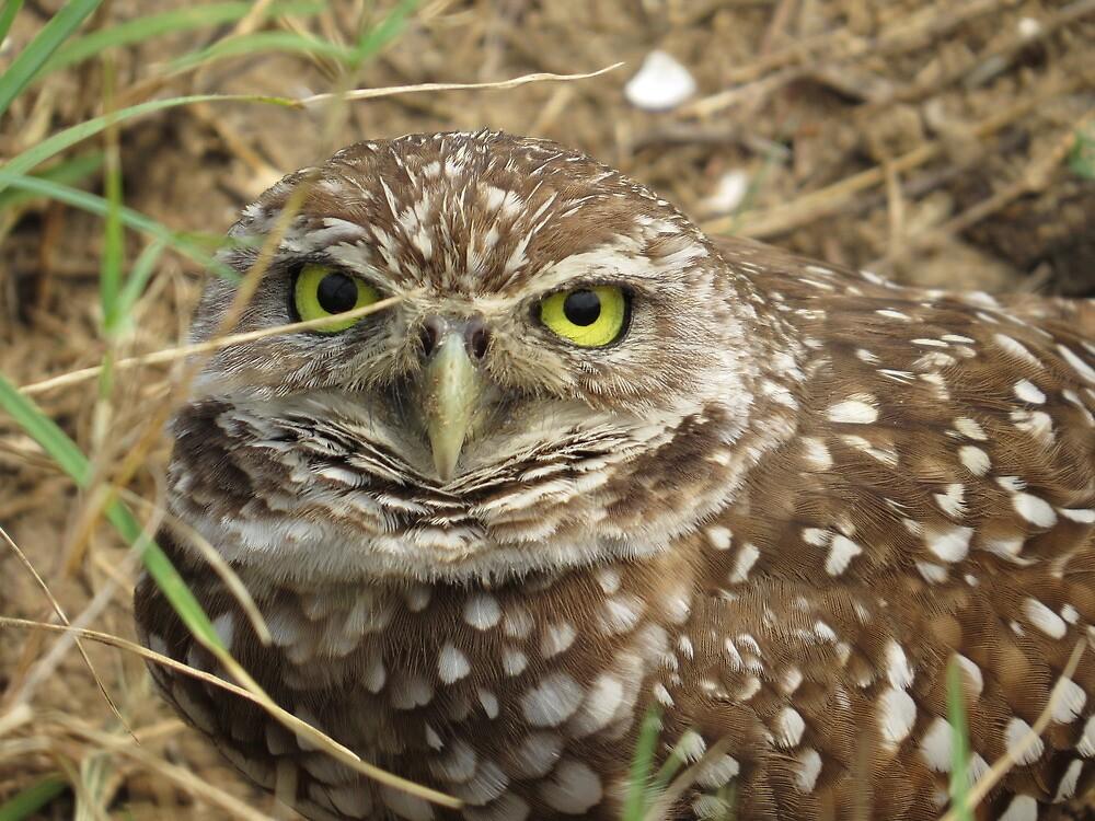 Burrowing Owl by enyaw