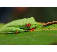 Red-Eyed Tree Frog Photographic Print