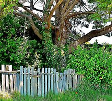 Gnarly Tree Behind a Ramshackle Fence by Martha Sherman