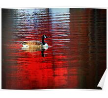 Fall Foliage Reflected in Water Poster