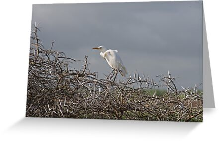 Safe place for Egrets by Warren. A. Williams