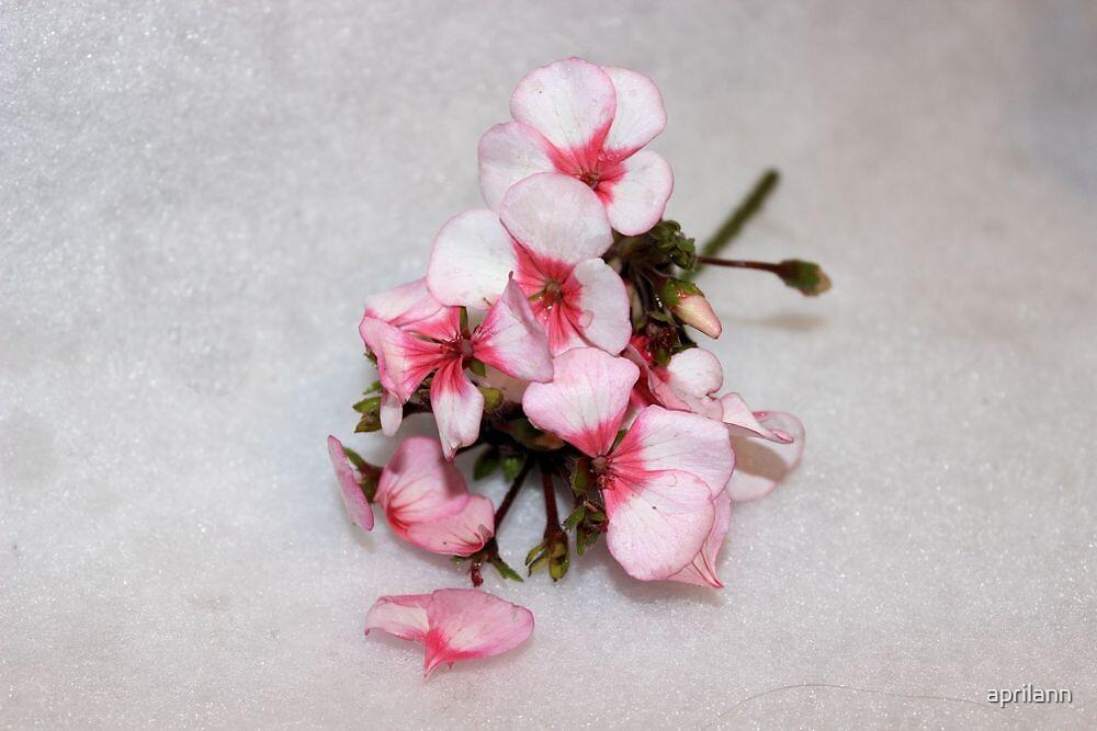Geranium Petals by aprilann